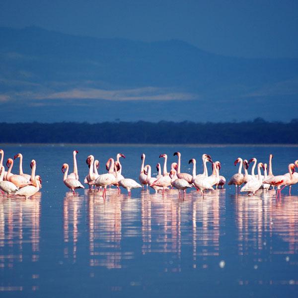 Nyeri – Lake Nakuru National Park (170 kms)