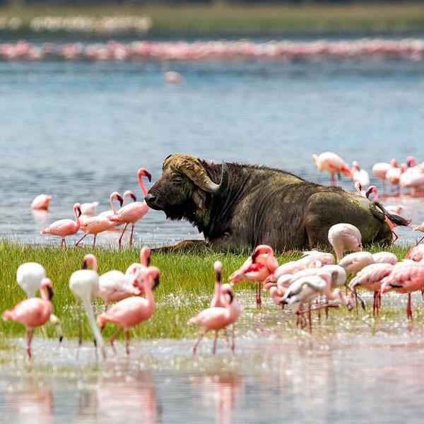 Lake Nakuru National Park – Maasai Mara National Reserve (320 kms)