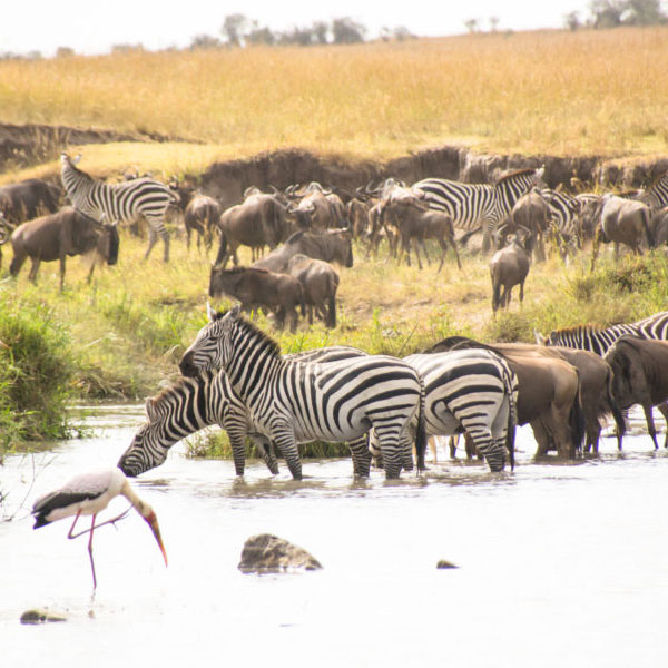 Maasai Mara National Reserve – Isebania (280 kms)