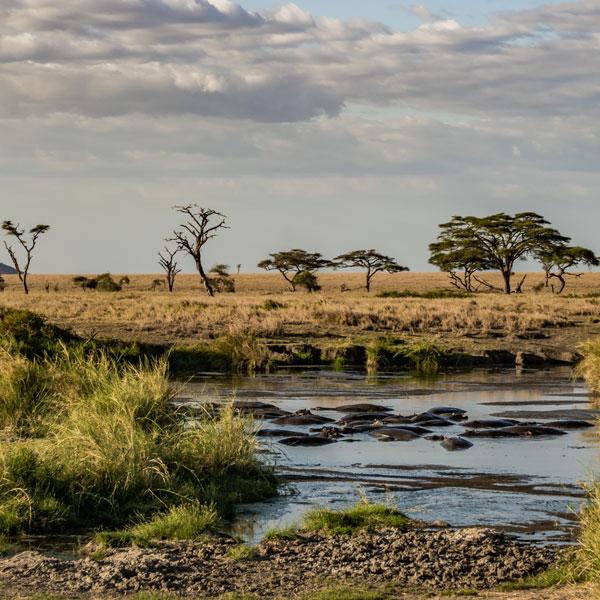 Lake Victoria – Serengeti National park