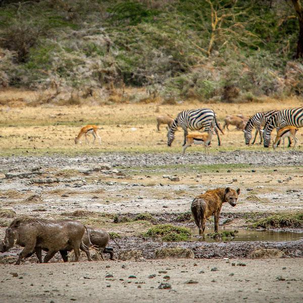 Central Serengeti National park (Full Day)