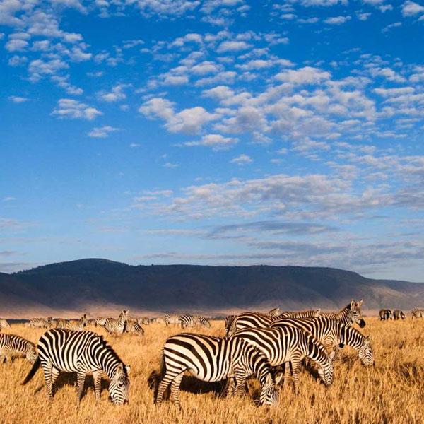Serengeti/Ngorongoro crater