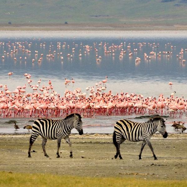 Lake Manyara National Park (Full Day)