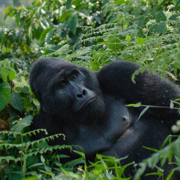 QLake Bunyonyi – Kampala