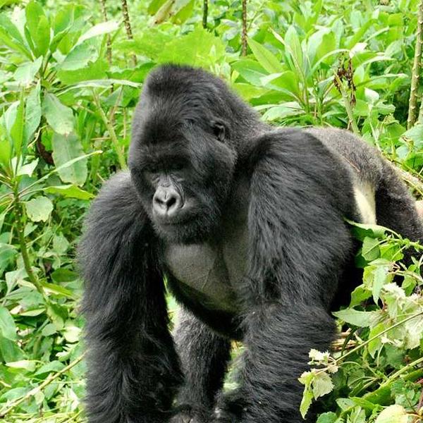 Musanze to Gisenyi – Lake Kivu