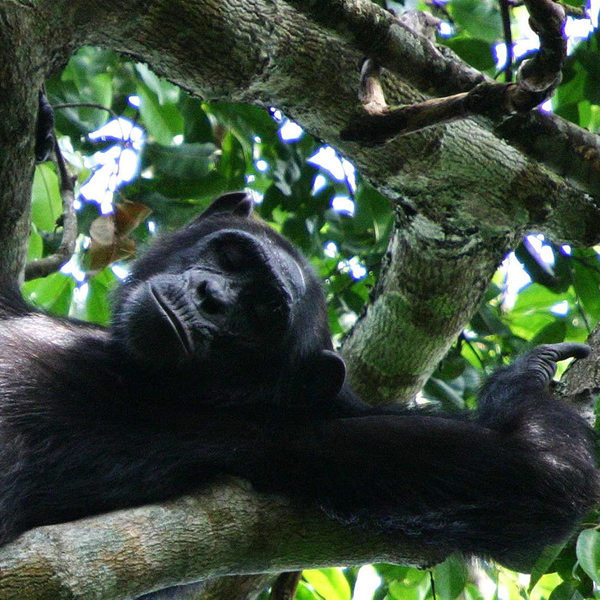 Gorilla tracking Volcanoes National Park