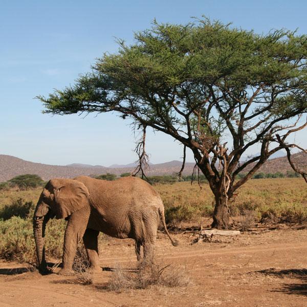 Nairobi – Samburu