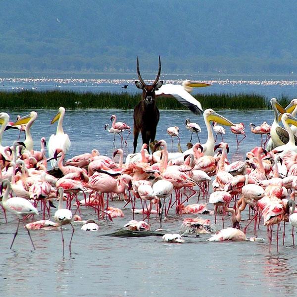 Nanyuki – Lake Nakuru