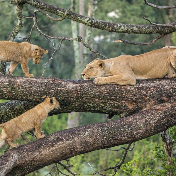 L.Manyara National park/Arusha