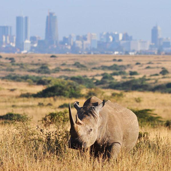 Amboseli – Nairobi -Departure