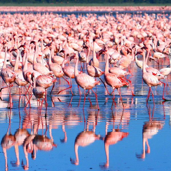 Nairobi – Lake Nakuru (160 kms)