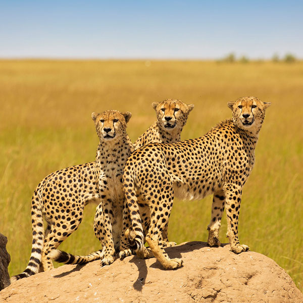 Masai Mara –   Isebania border/Musoma