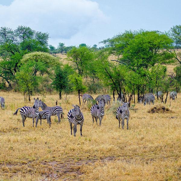 Musoma/Serengeti National park