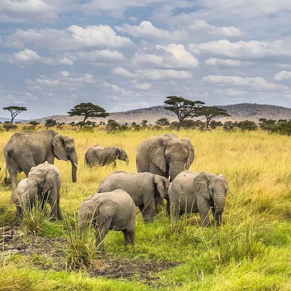 Serengeti National park (Full day)