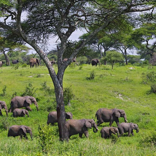 Serengeti-Optional Maasai village/Olduvai Gorge/Karatu
