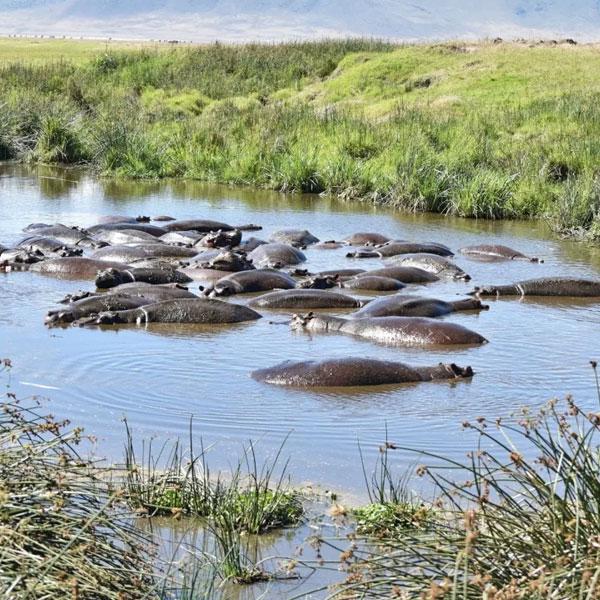 Ngorongoro crater (Full day)