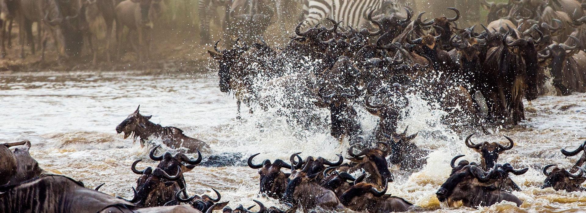 2 Days Masai Mara Wildebeest Migration Safari from Mombasa by Air