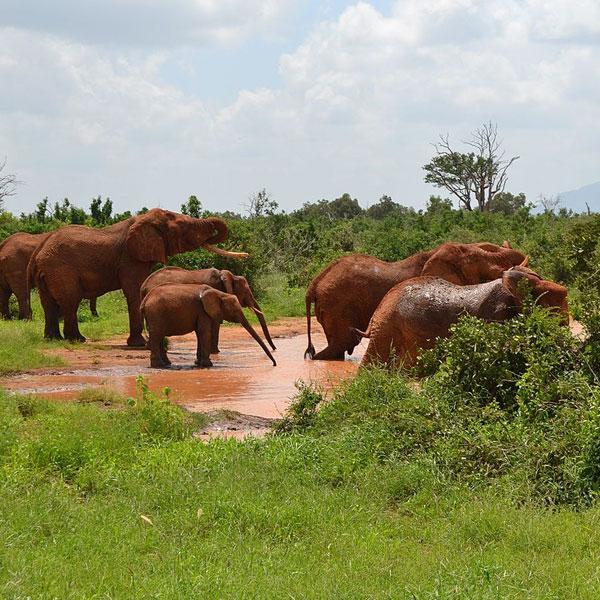 Amboseli – Tsavo West (155 kms)