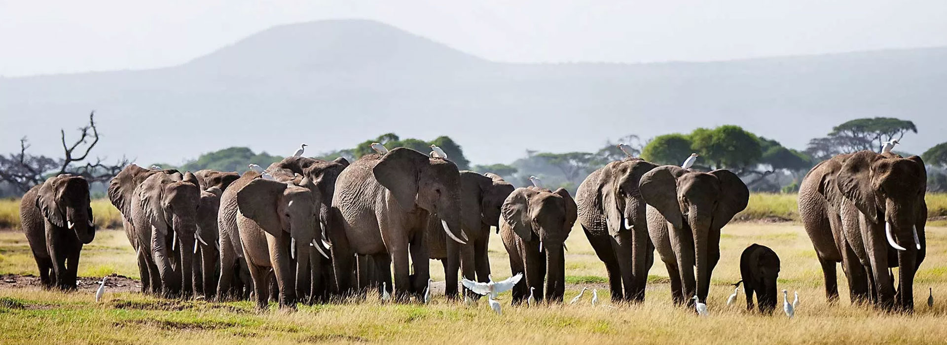 4 Days Tsavo East, Amboseli and Tsavo West Safari