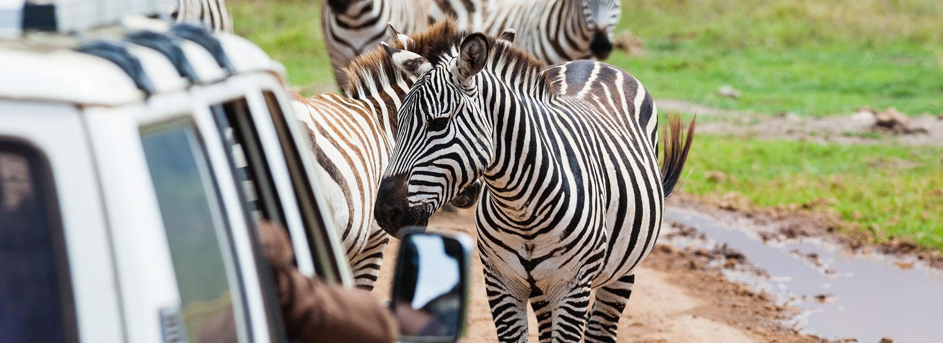 4 Days Explore Kenya & Tanzania Safari