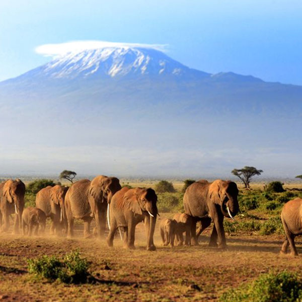 Amboseli  – Lake Manyara (Kenya to Tanzania Safari)