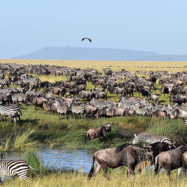 Ngorongoro – Namanga – Nairobi (Tanzania to Kenya Safari)