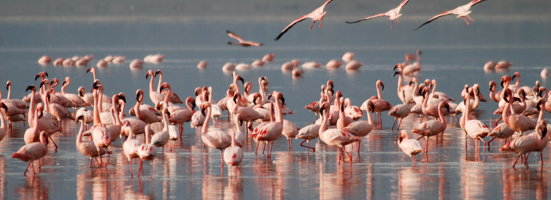 4 Days Lake Nakuru, Lake Naivasha and Masai Mara Safari