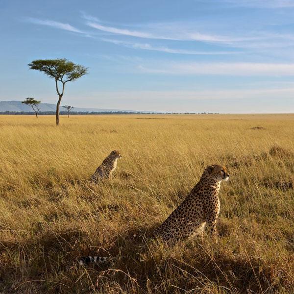 Lake Nakuru – Lake Naivasha – Masai Mara