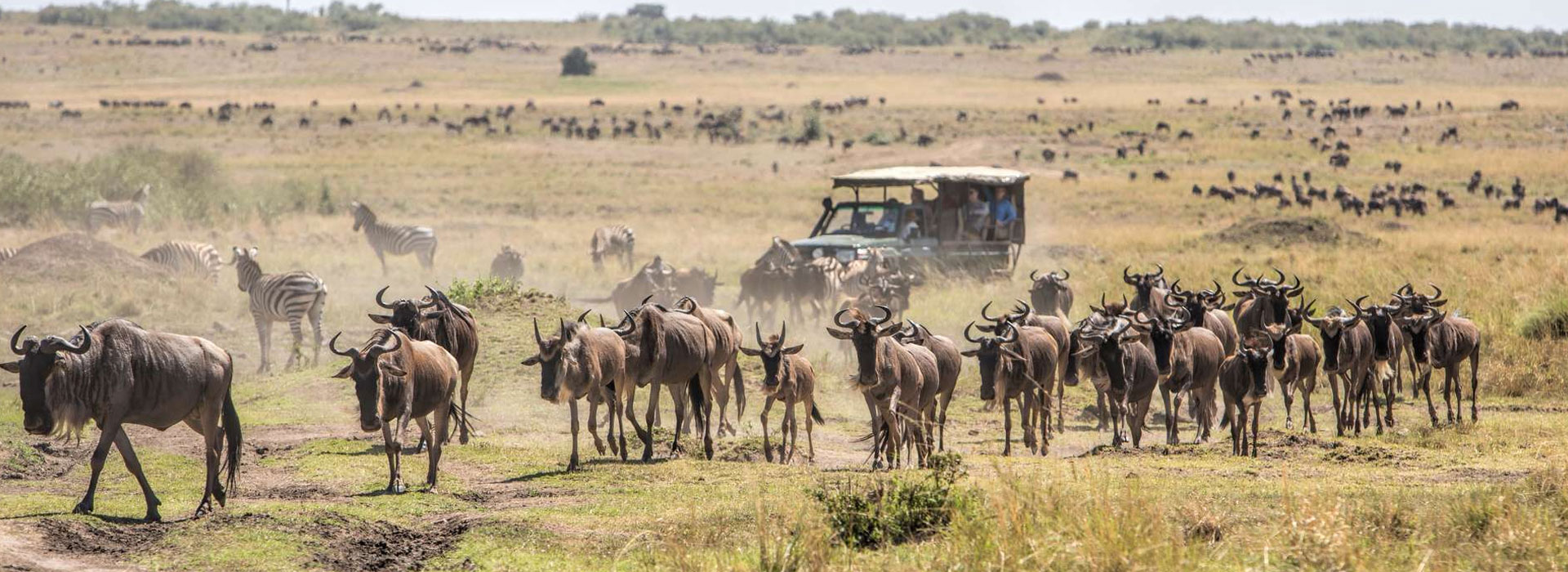 4 Days Masai Mara Wildebeest Migration Safari by Air from Mombasa