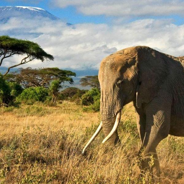 Nairobi – Amboseli: Kenya