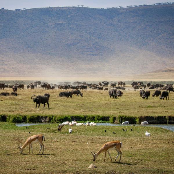 Amboseli (Kenya) – Ngorongoro Crater (Tanzania)