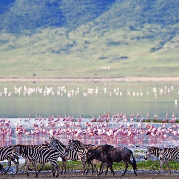 Ngorongoro Crater – Tarangire (Tanzania)