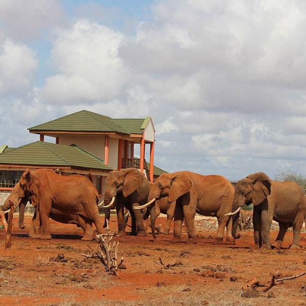 Amboseli – Ngutuni (280 kms)