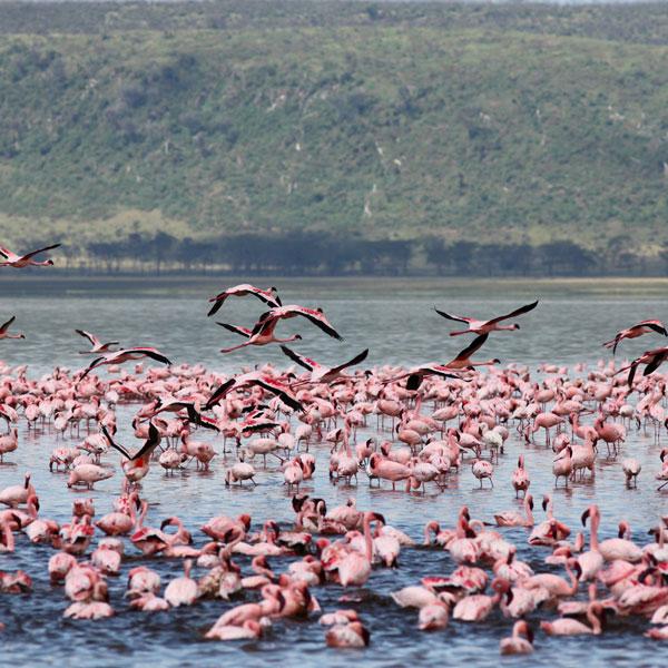 Lake Nakuru – Nairobi, Kenya