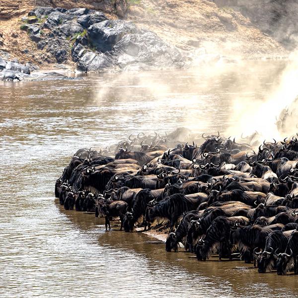 Arusha - Serengeti
