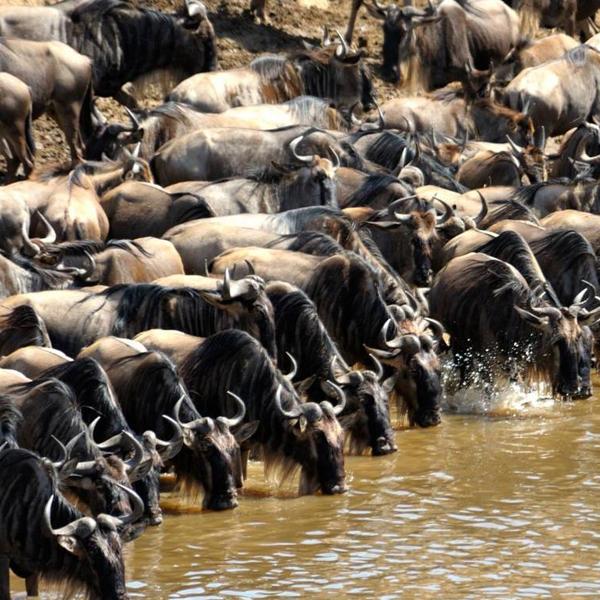 Ngorongoro - Tarangire