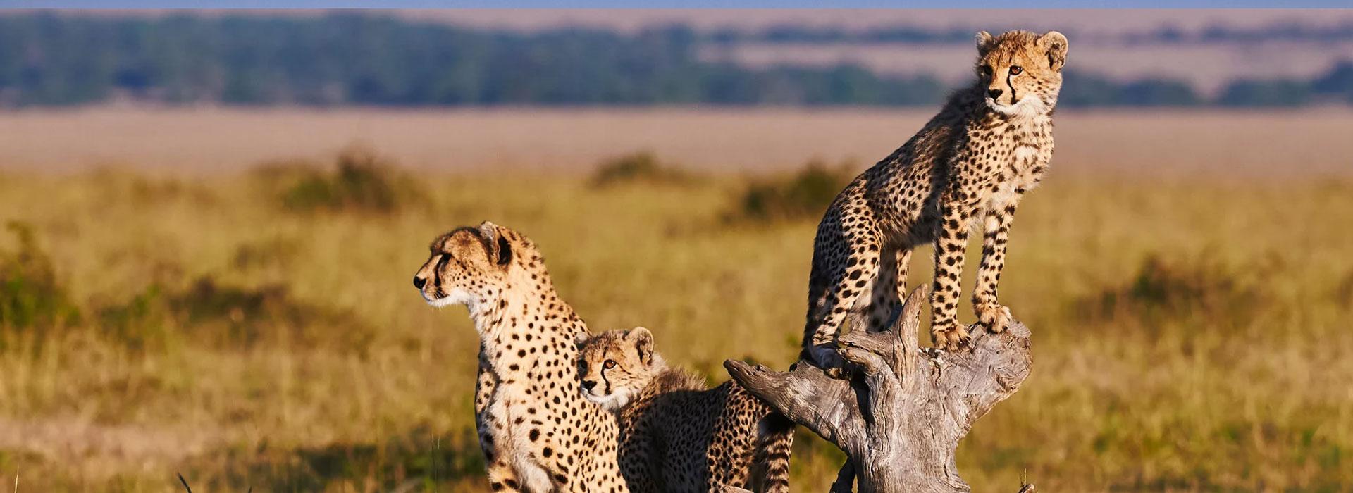 6 Days Masai Mara, Lake Nakuru and Amboseli Budget Safari