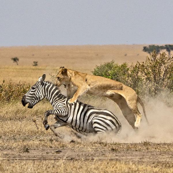 Nairobi – Masai Mara, Kenya