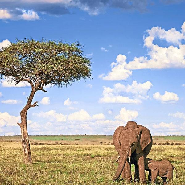 Lake Nakuru , Amboseli National Park, Kenya