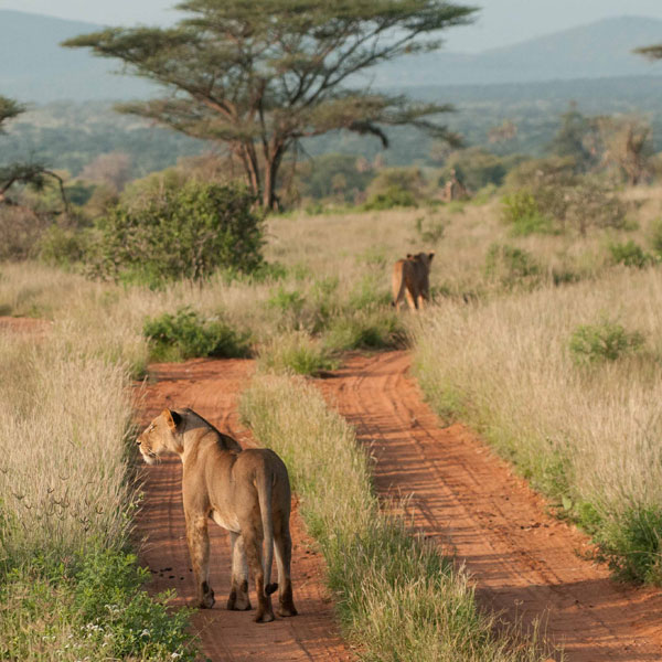 Nairobi – Samburu National Park