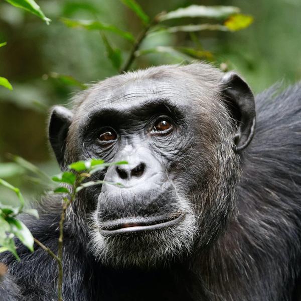 Kampala to Kibale National Park – Uganda