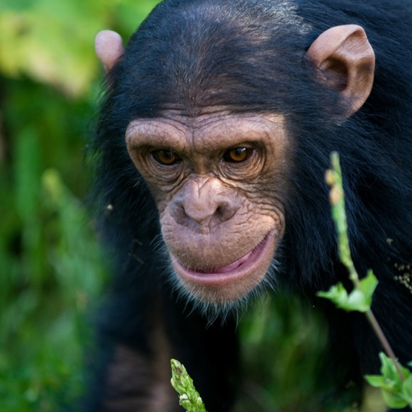 Kibale National Park to Queen Elizabeth Park – Uganda