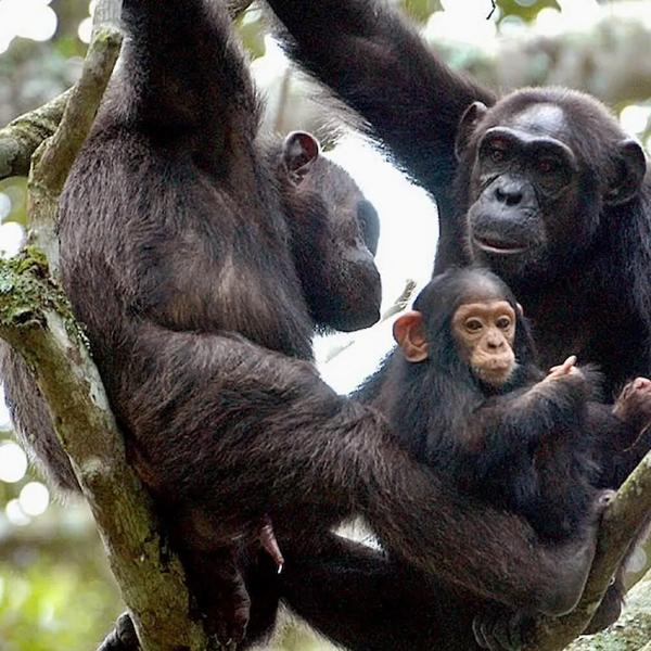 Queen Elizabeth National Park – Uganda