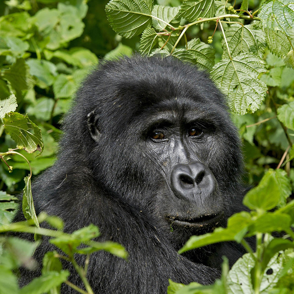 Queen Elizabeth Park to Bwindi – Uganda