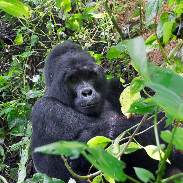 Bwindi Park to Kampala & Entebbe – Uganda