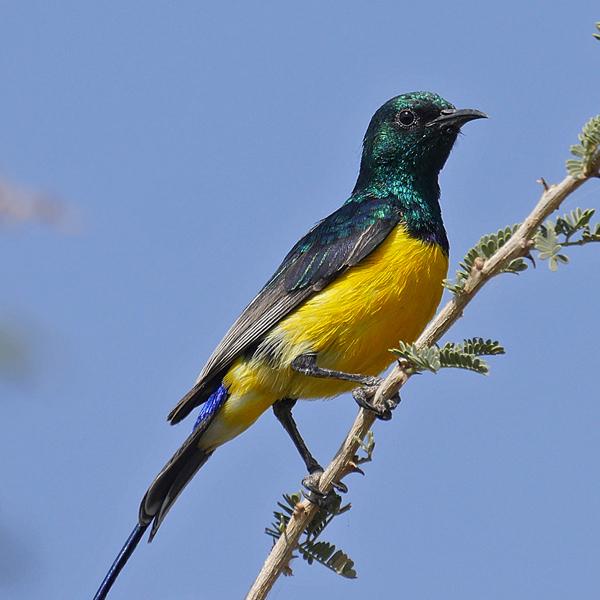 Kibale National Park/Queen Elizabeth National Park