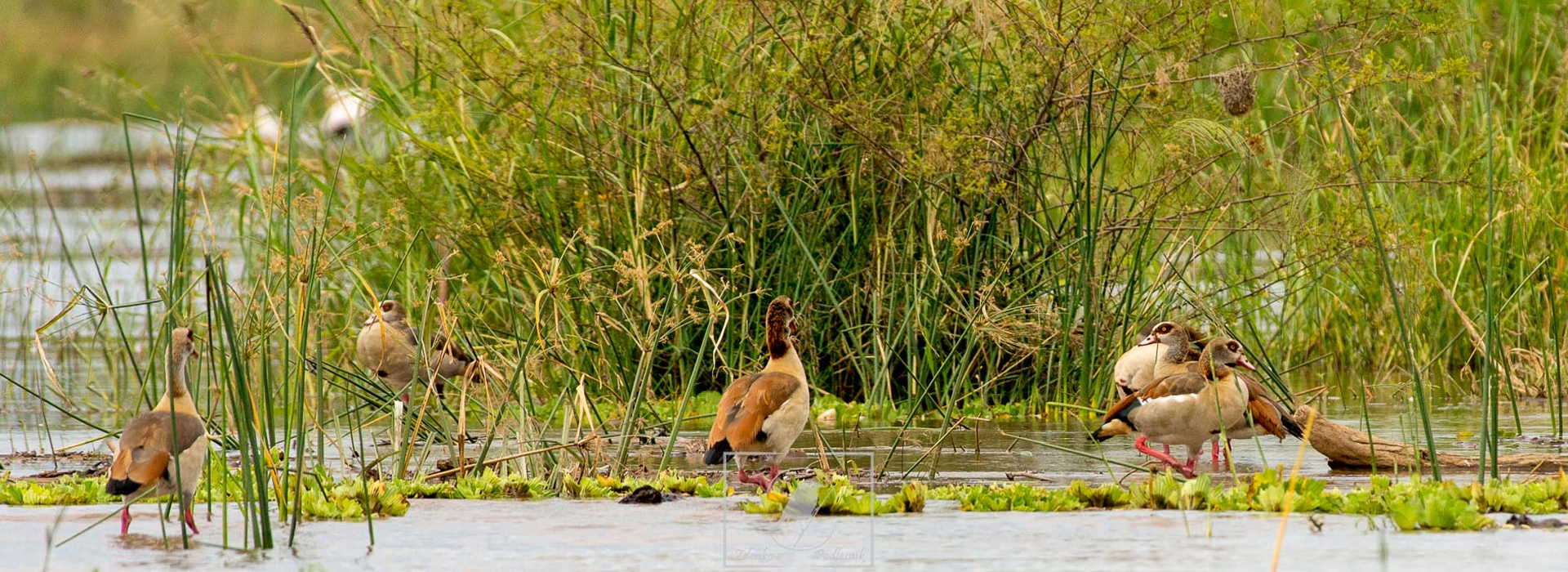 8 Days Ethiopia Bird Watching