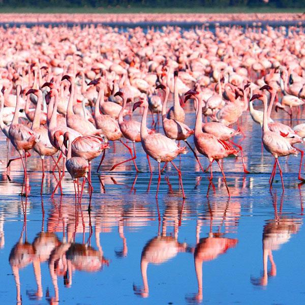SNanyuki – Lake Nakuru (190 kms)