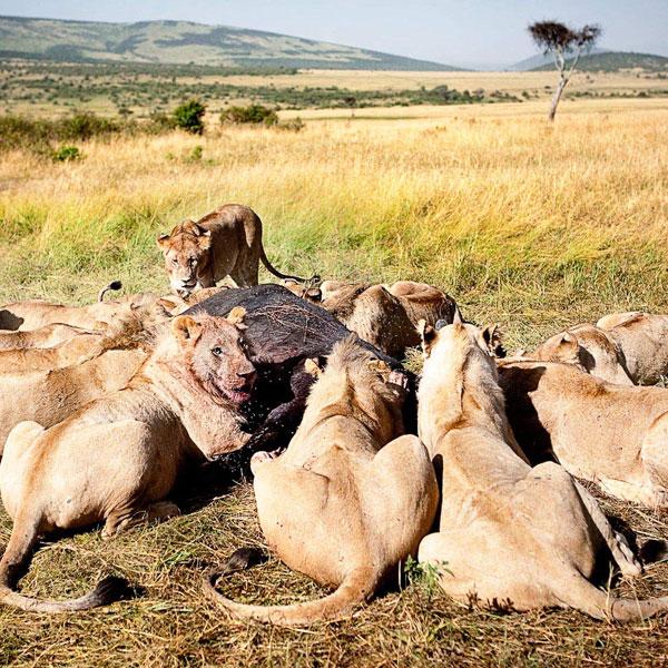 Lake Naivasha – Maasai Mara (250 kms)