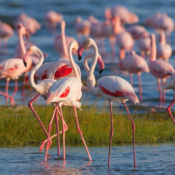 Amboseli – lake Naivasha (320 Kms)